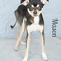 Adopt A Pet :: MASON - Modesto, CA