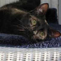 Adopt A Pet :: Summer - Oyster Bay, NY