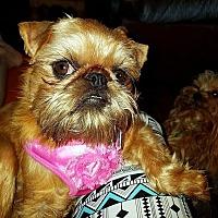 Adopt A Pet :: ETTA JAMES - ADOPTION PENDING - Seymour, MO