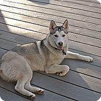 Adopt A Pet :: Kala - Horsham, PA