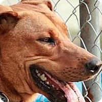 Adopt A Pet :: Ryder - Tampa, FL