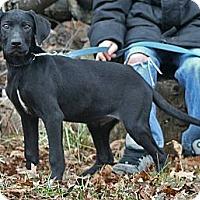 Adopt A Pet :: Ruff - Spring City, PA