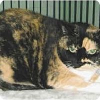 Adopt A Pet :: Abigail - Medway, MA