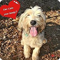 Adopt A Pet :: Dinah - Franklinton, NC