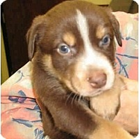 Adopt A Pet :: Rusty - Kingwood, TX