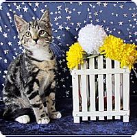 Adopt A Pet :: Lilo - Orlando, FL