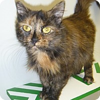 Adopt A Pet :: Molasses - Hamburg, NY