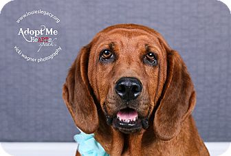 Bloodhound Mix Dog for adoption in Cincinnati, Ohio - Nelly- WAIVED FEE