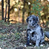 Adopt A Pet :: Lizzie - South Dennis, MA