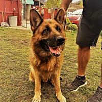 Adopt A Pet :: Kaiser - San Diego, CA