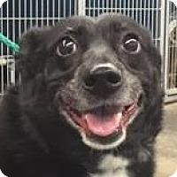 Adopt A Pet :: Macy - Springdale, AR