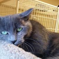 Adopt A Pet :: Ursula - Waupun, WI