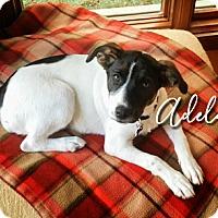 Adopt A Pet :: Adelaide - Joliet, IL