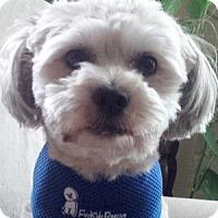 Adopt A Pet :: Maxie - La Costa, CA