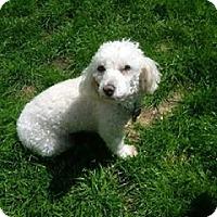 Adopt A Pet :: Fendi - Alden, NY