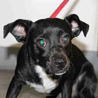 Adopt A Pet :: BLACKY - Los Angeles, CA