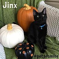 Adopt A Pet :: Jinx - Columbus, OH