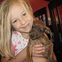 Adopt A Pet :: Aurora - Tonawanda, NY