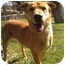 Photo 3 - Shepherd (Unknown Type) Mix Dog for adoption in Encino, California - Star