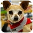 Photo 4 - Chihuahua Mix Dog for adoption in Austin, Texas - Finn