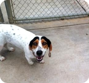 Basset Hound Mix Dog for adoption in Columbus, Georgia - Checkers 7067