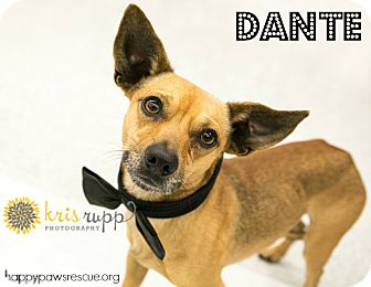 Miniature Pinscher/Chihuahua Mix Dog for adoption in South Plainfield, New Jersey - Dante