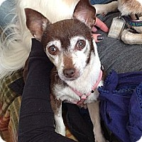 Adopt A Pet :: Penny - Wilmington, DE