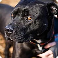 Adopt A Pet :: Roxy (aka Sunshine!) - Seattle, WA