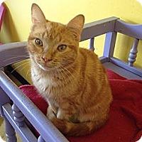 Adopt A Pet :: Heaven - Mobile, AL