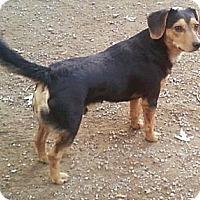Adopt A Pet :: Dink - Toledo, OH