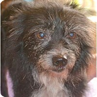 Adopt A Pet :: Polly - Greensboro, NC