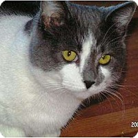 Adopt A Pet :: Hawley - Saskatoon, SK