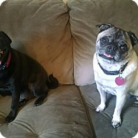 Adopt A Pet :: Suzie and Buttons - Eagle, ID