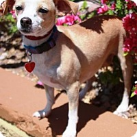 Adopt A Pet :: Kharman - Gilbert, AZ