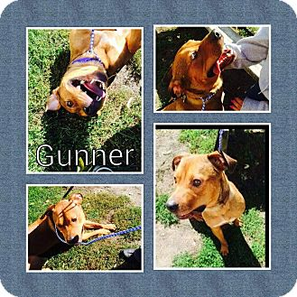 Boxer/Rottweiler Mix Dog for adoption in Racine, Wisconsin - Gunner