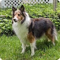 Adopt A Pet :: Bailey - Charlottesville, VA