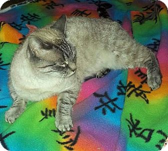 Siamese Cat for adoption in Modesto, California - Jasmin