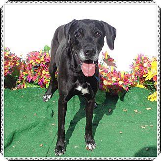 Labrador Retriever Mix Dog for adoption in Marietta, Georgia - SHANIA (R)