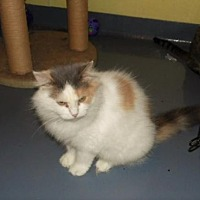 Adopt A Pet :: Sybil - Frenchburg, KY