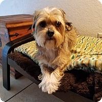 Adopt A Pet :: Ginger - San Dimas, CA