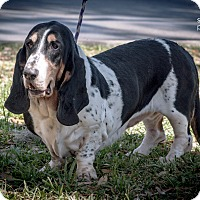 Adopt A Pet :: Cher - Gainesville, FL