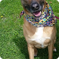 Adopt A Pet :: Gertie - Foster Needed - Detroit, MI