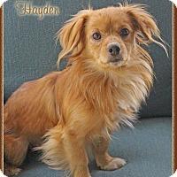Adopt A Pet :: Hayden - Hillsboro, TX