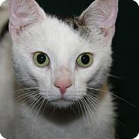 Adopt A Pet :: Raymond (Neutered) - Marietta, OH