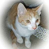 Adopt A Pet :: Bono - Greensburg, PA