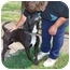 Photo 3 - Boston Terrier/German Shepherd Dog Mix Dog for adoption in Sumner, Iowa - Lucky