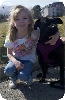 Mountain Cur/Labrador Retriever Mix Dog for adoption in Williston, Vermont - Lizzie