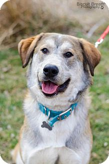 Husky Mix Dog for adoption in Howell, Michigan - Preston