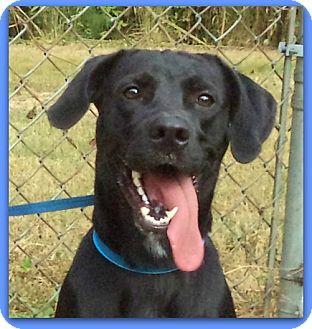 Labrador Retriever Mix Dog for adoption in Marietta, Georgia - SMOKEY (R)