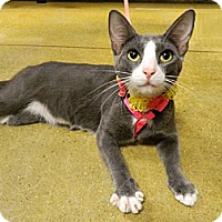 Adopt A Pet :: Heidi - The Colony, TX